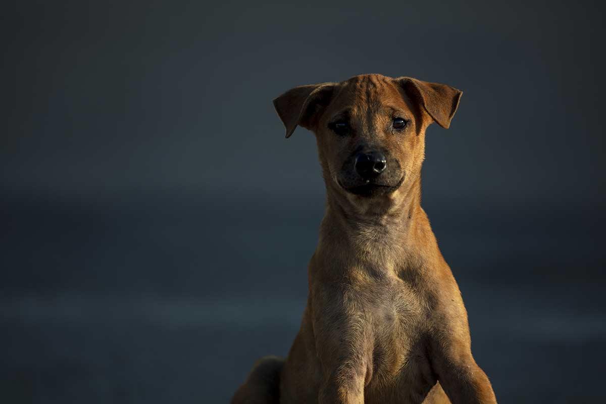 Cani: I problemi causati dai metodi coercitivi
