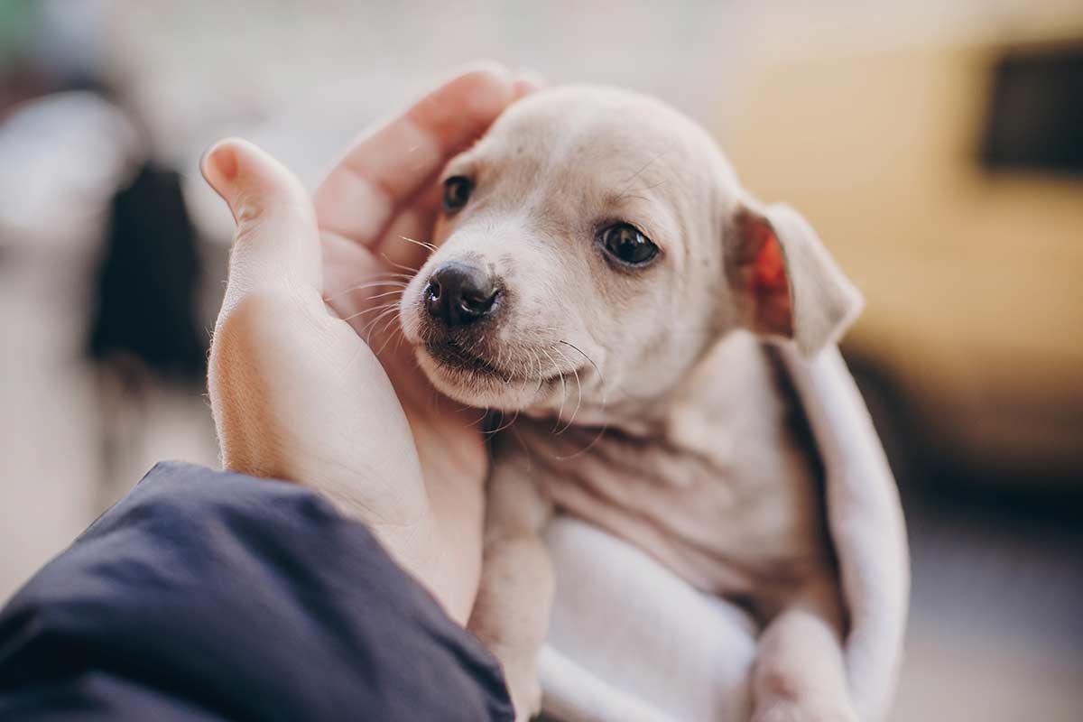 Alcuni comportamenti dei cani che sono spesso mal compresi
