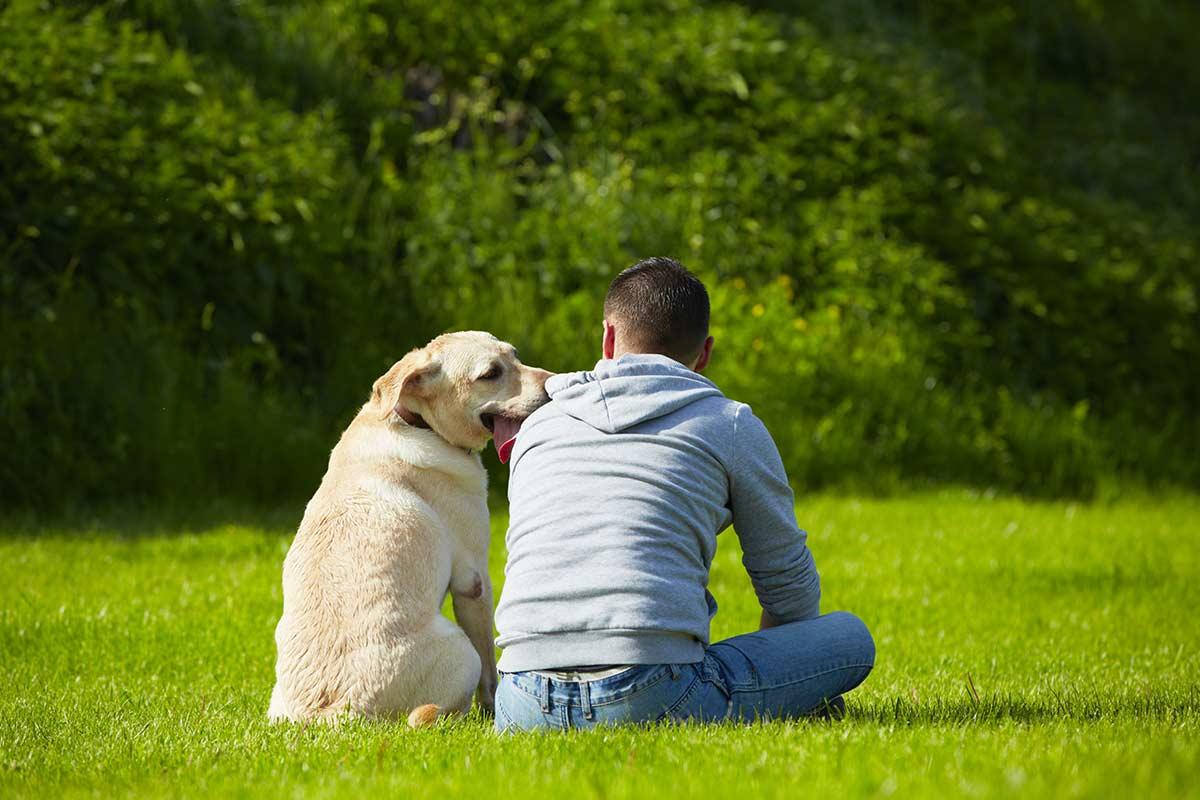 Cani: Cosa dovrebbero sapere i proprietari
