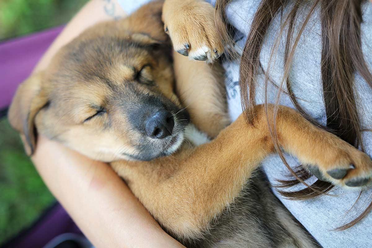 A proposito di cani e proprietari
