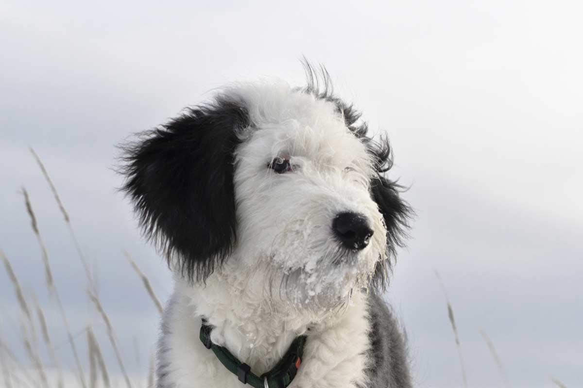 A cosa servono i baffi dei cani