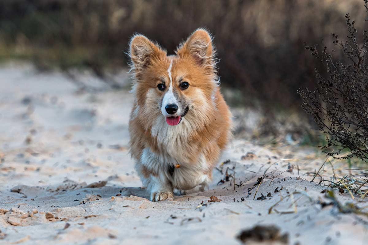 6 cose utili e interessanti da sapere sui cani