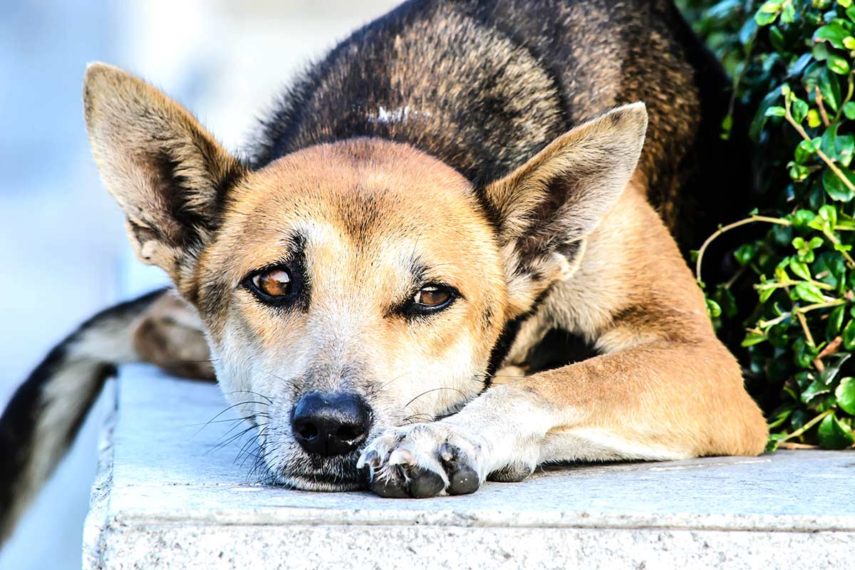Come fanno i cani a capire lo stato d'animo degli umani