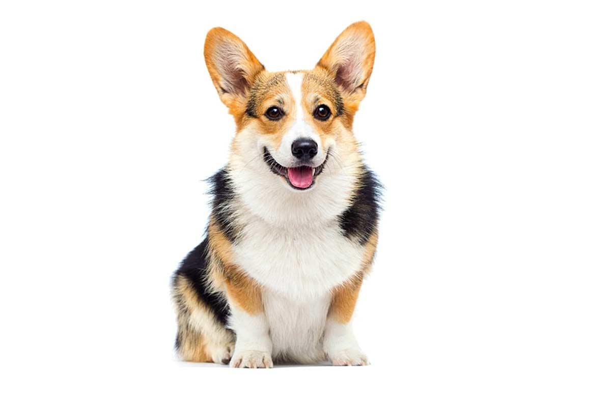Anedotti di incontri più e meno ravvicinati con altri proprietari di cane