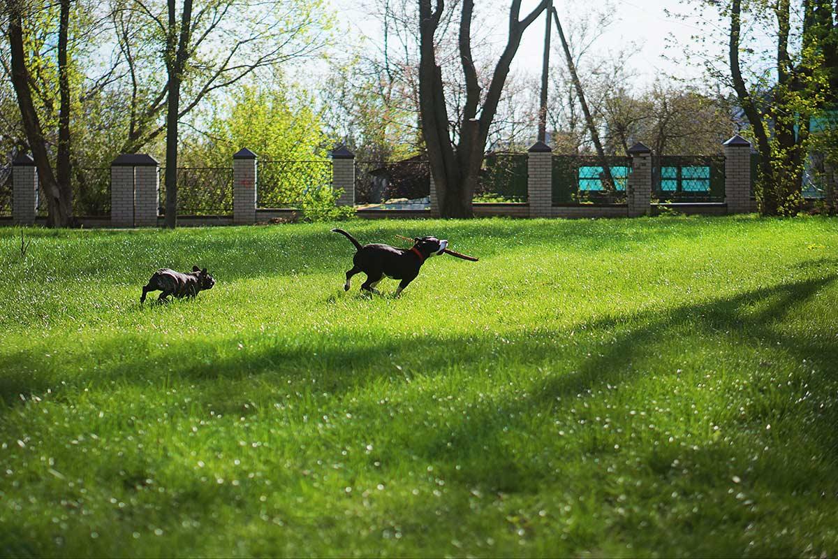 Cani: socializzazione e socializzare non sono la stessa cosa