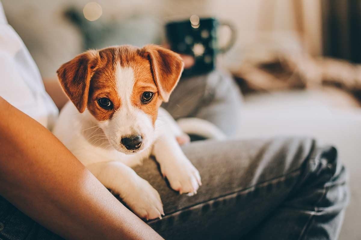 Come aiutare un cane che soffre di ansia da separazione