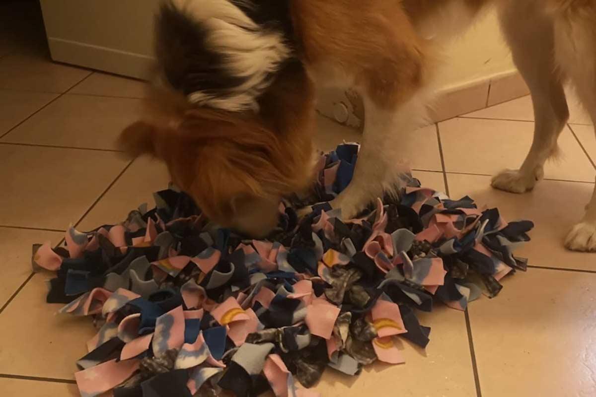 Come impegnare il cane in casa: il tappetino olfattivo