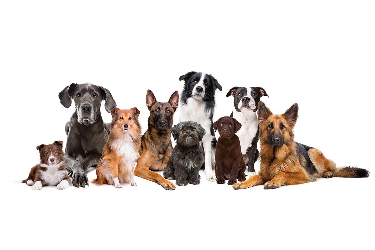 Quali alimenti degli umani possono mangiare i cani