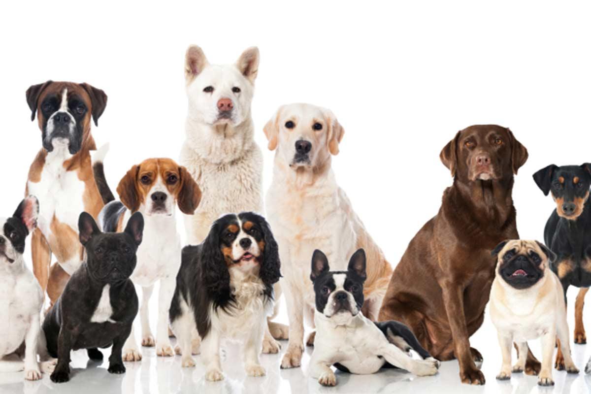 La relazione degli umani con i cani