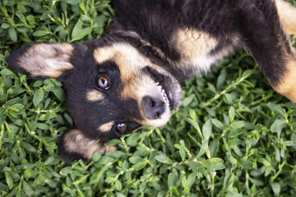 Dal timido al persistente, 7 modi di essere dei cani