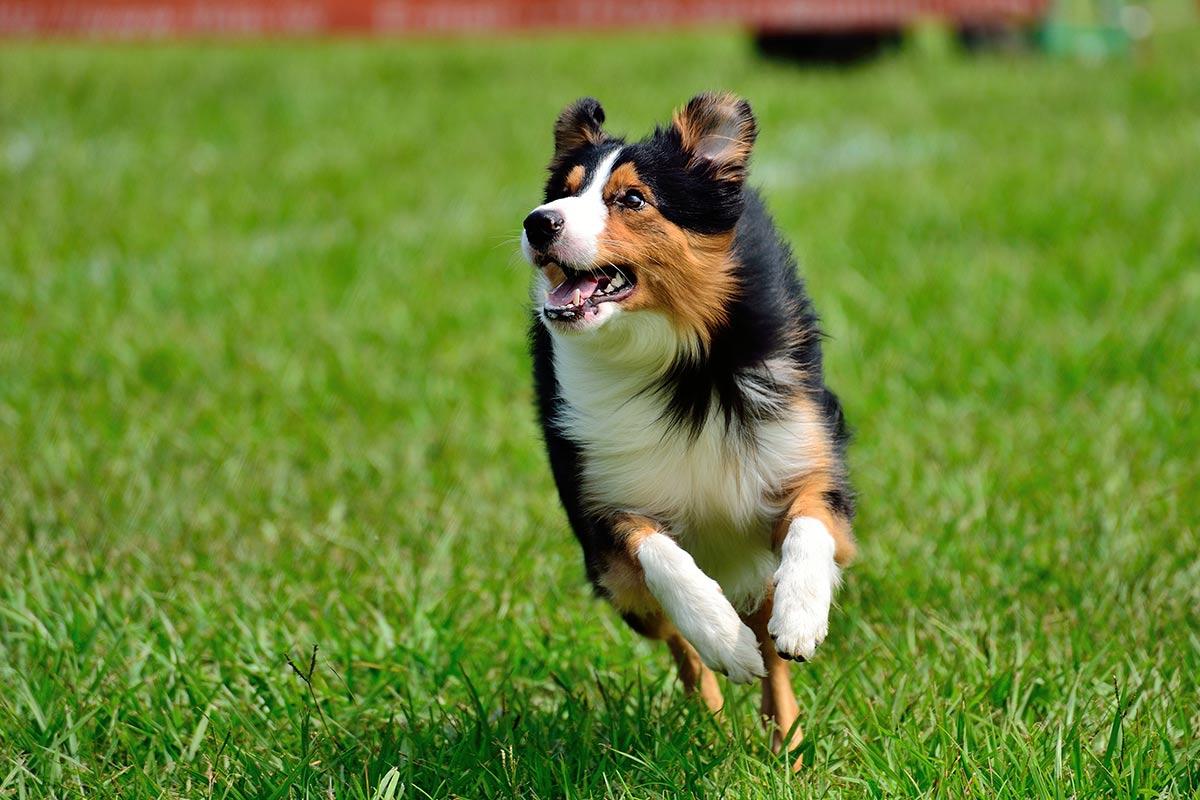 E' vero che il cane è il miglior amico dell'uomo?