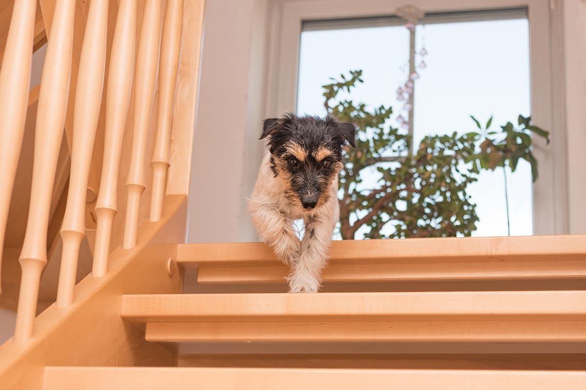 Il cane ha paura delle scale: cosa fare