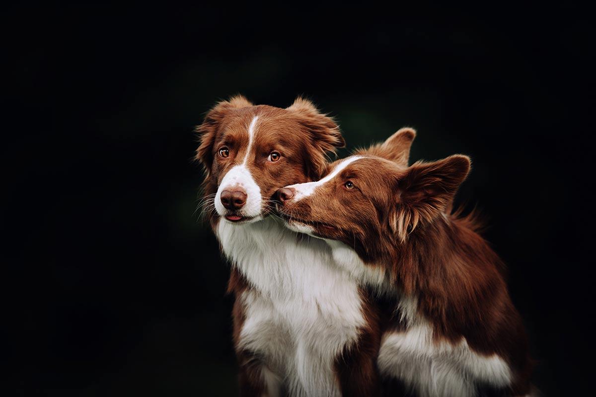 I cani perdonano?