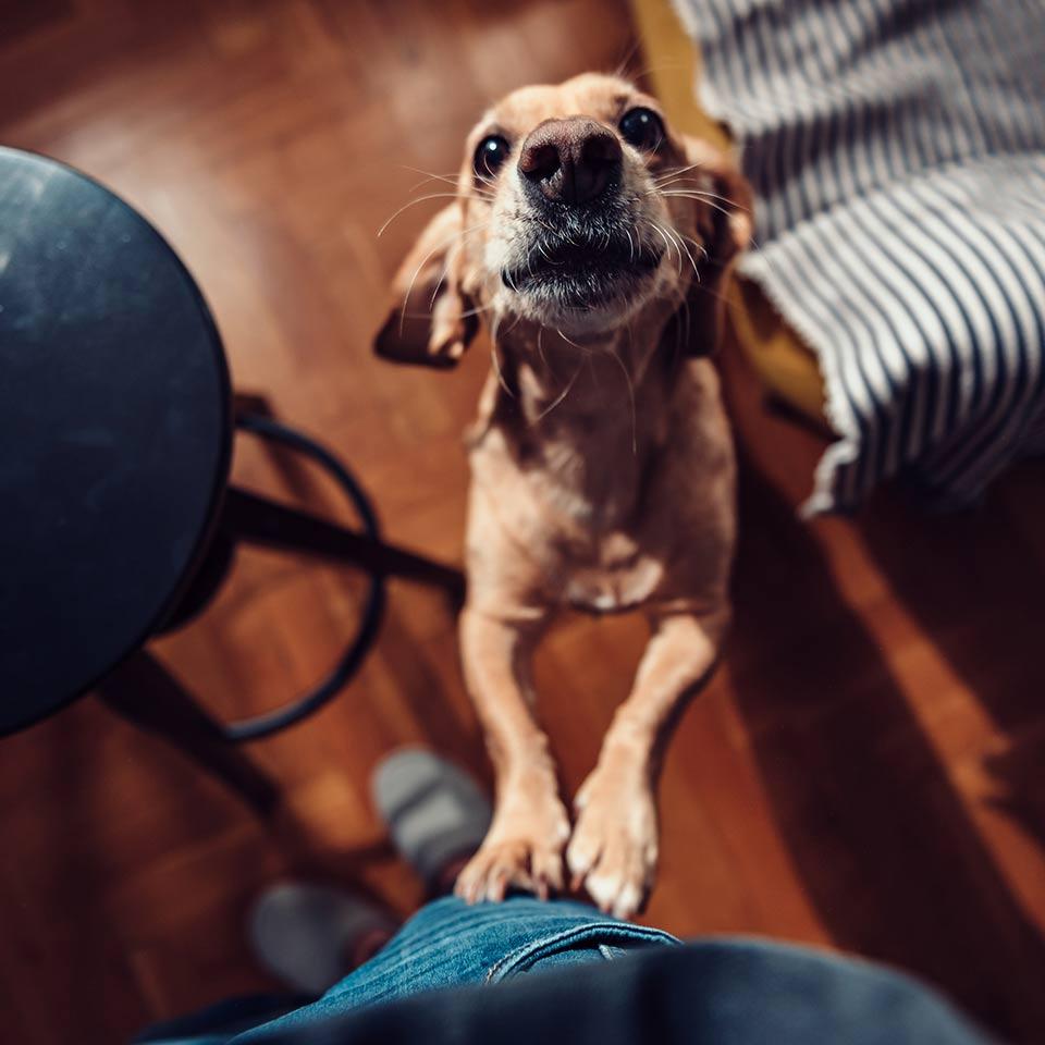 Cosa fare per modificare i comportamenti indesiderati del cane: ignorare funziona?