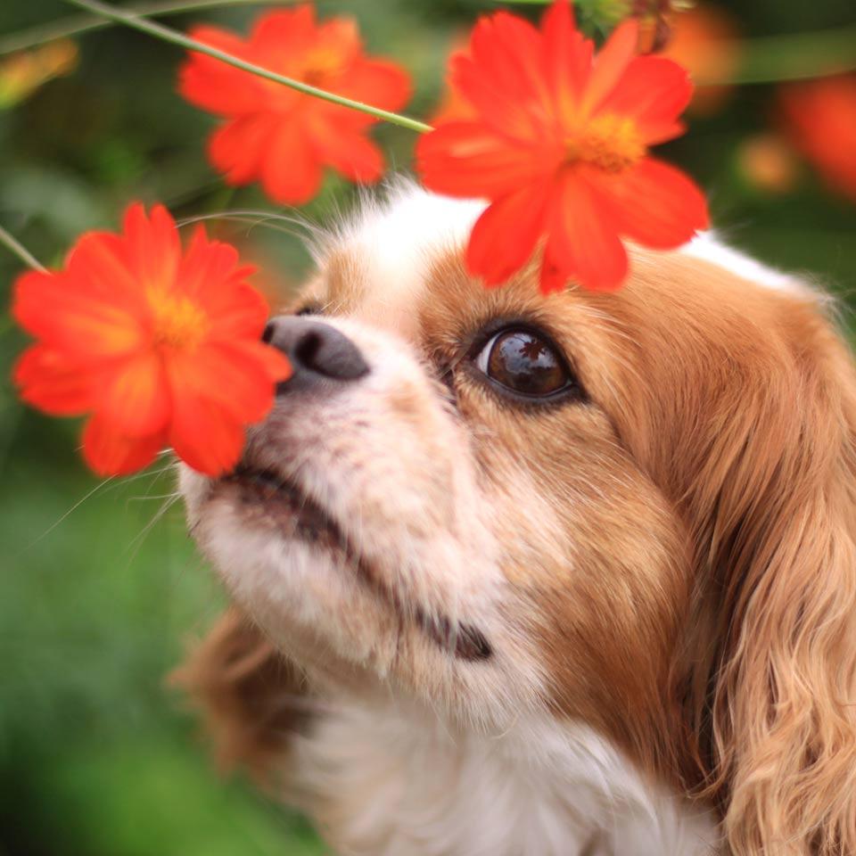Perchè è importante che i cani usino l'olfatto