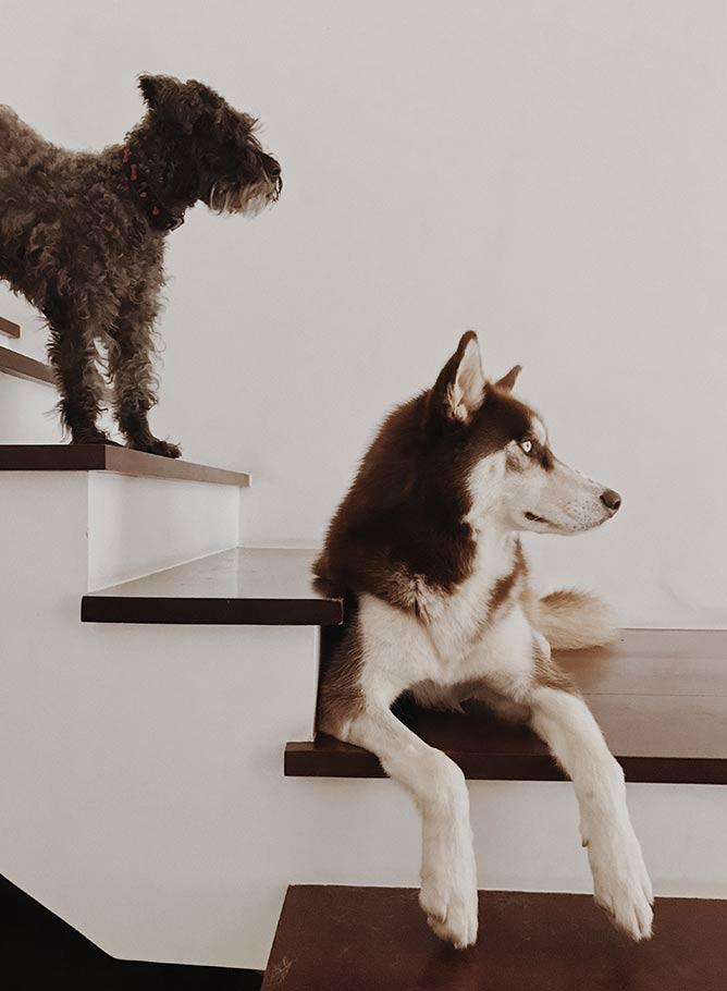 Cosa fare quando i cani di cani di casa non vanno d'accordo