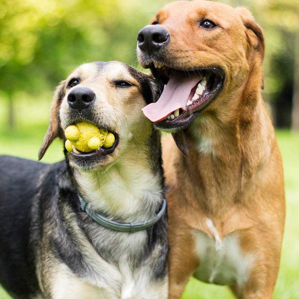Perchè e come scegliere i compagni di gioco del proprio cane