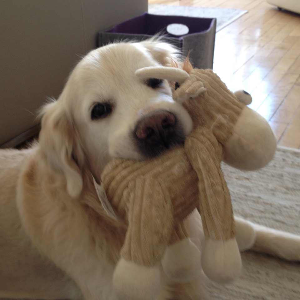 Capire i comportamenti del proprio cane