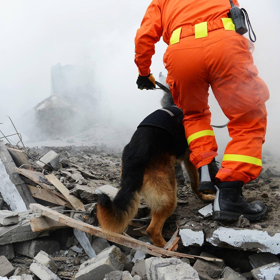 I cani e il disordine da stress post traumatico