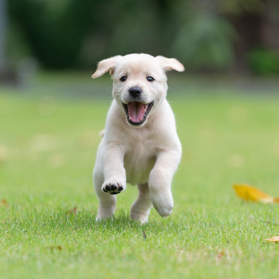 Cani: attenzione alle cose che si sentono ai giardini