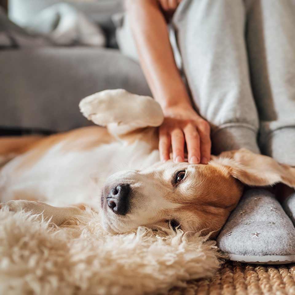 E' vero che i cani sono fatti dai proprietari?