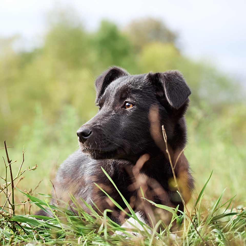 Un fenomeno fantastico: I cani si sincronizzano con i loro proprietari