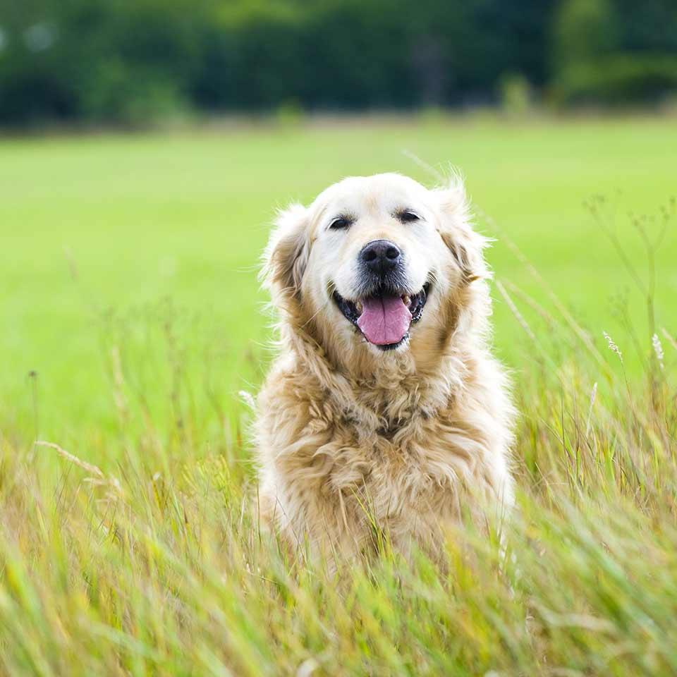 I cani capiscono le conseguenze delle loro azioni?