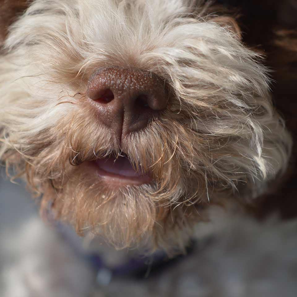 I cani e sentimenti degli umani: l'odore della paura