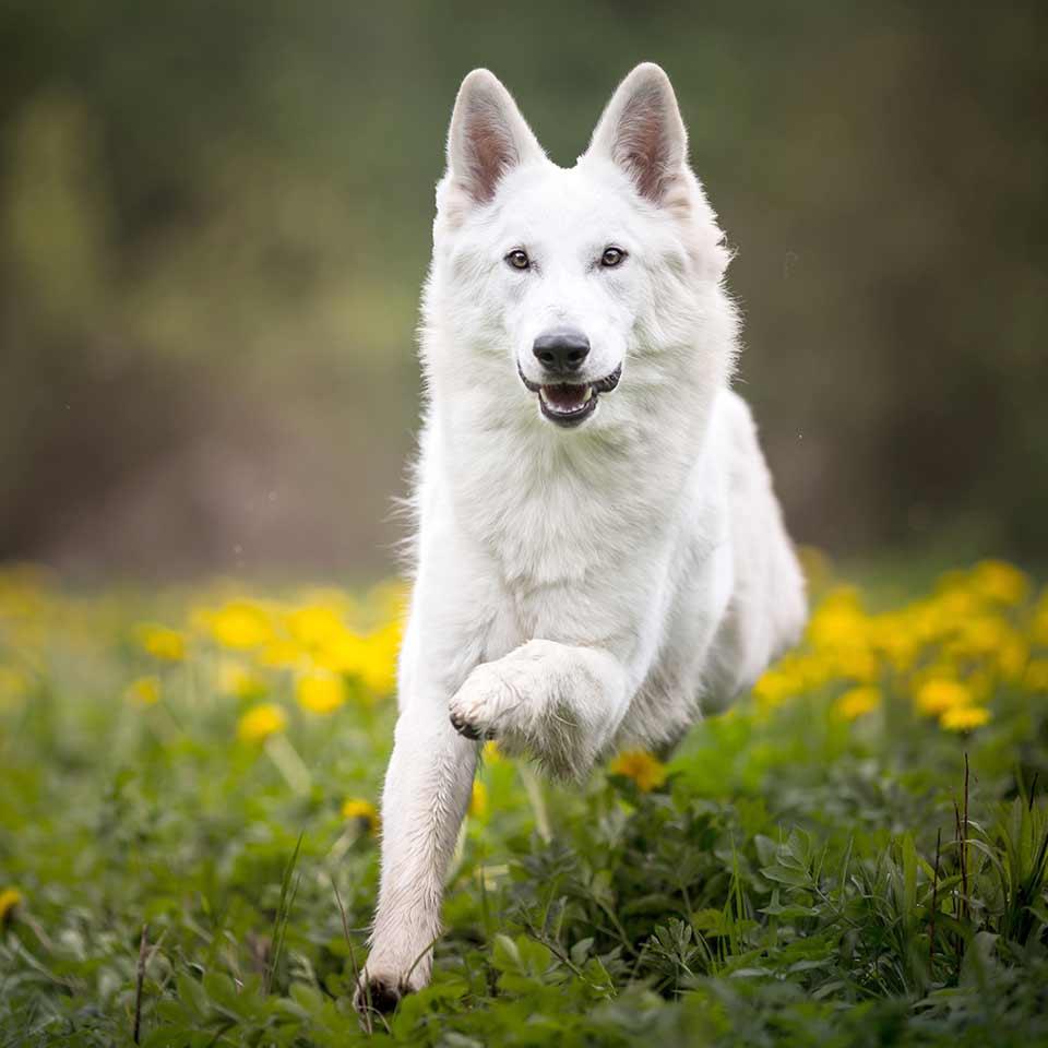 Come insegnare il richiamo al cane in modo facile e veloce