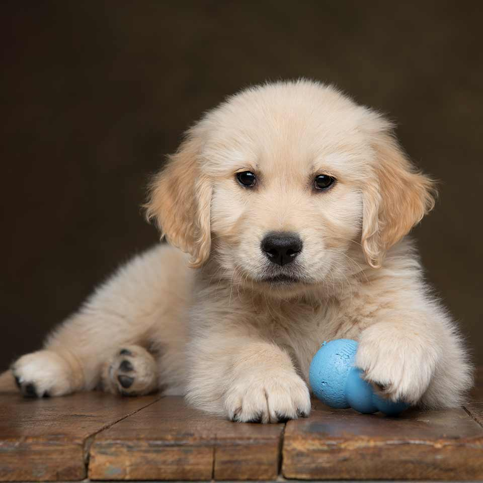 Come gestire al meglio il cucciolo di cane