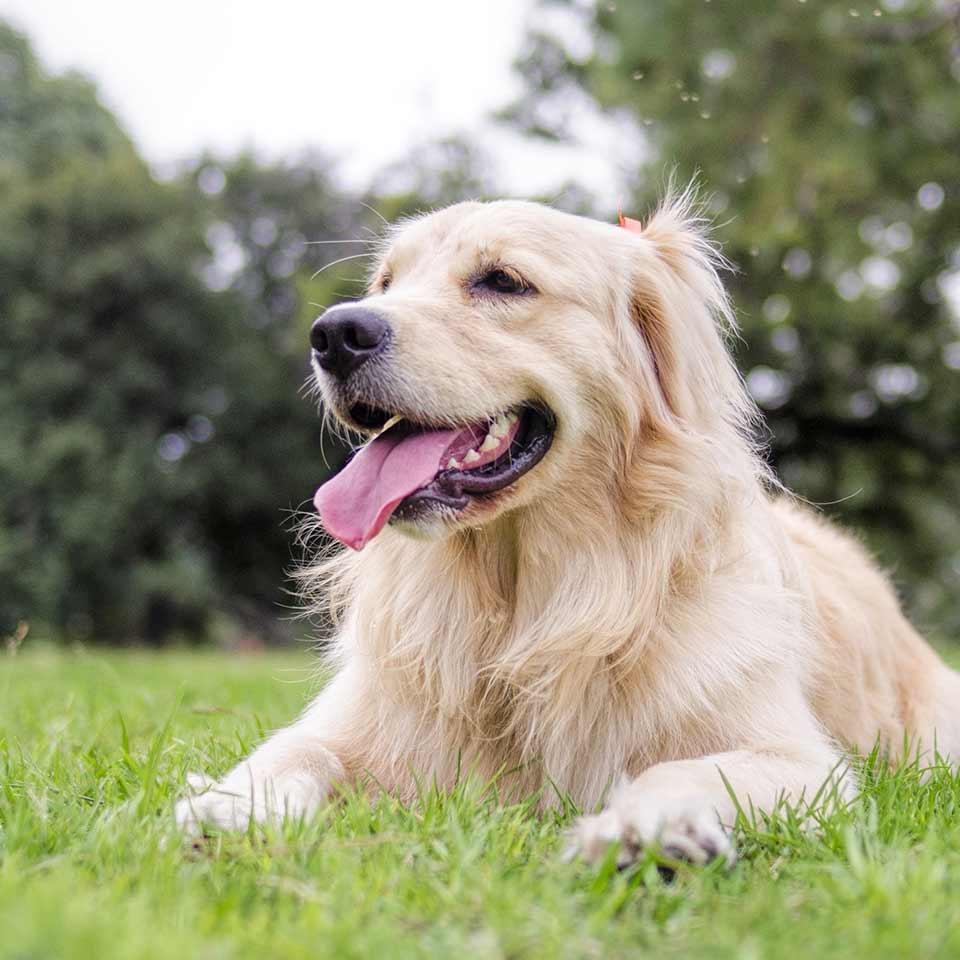 Come creare una vita felice con e per il cane