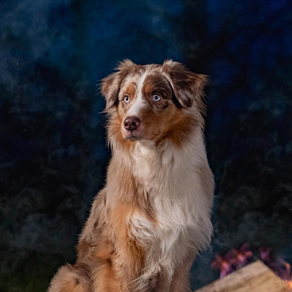 Il genoma dei cani: quante cose sta rivelando