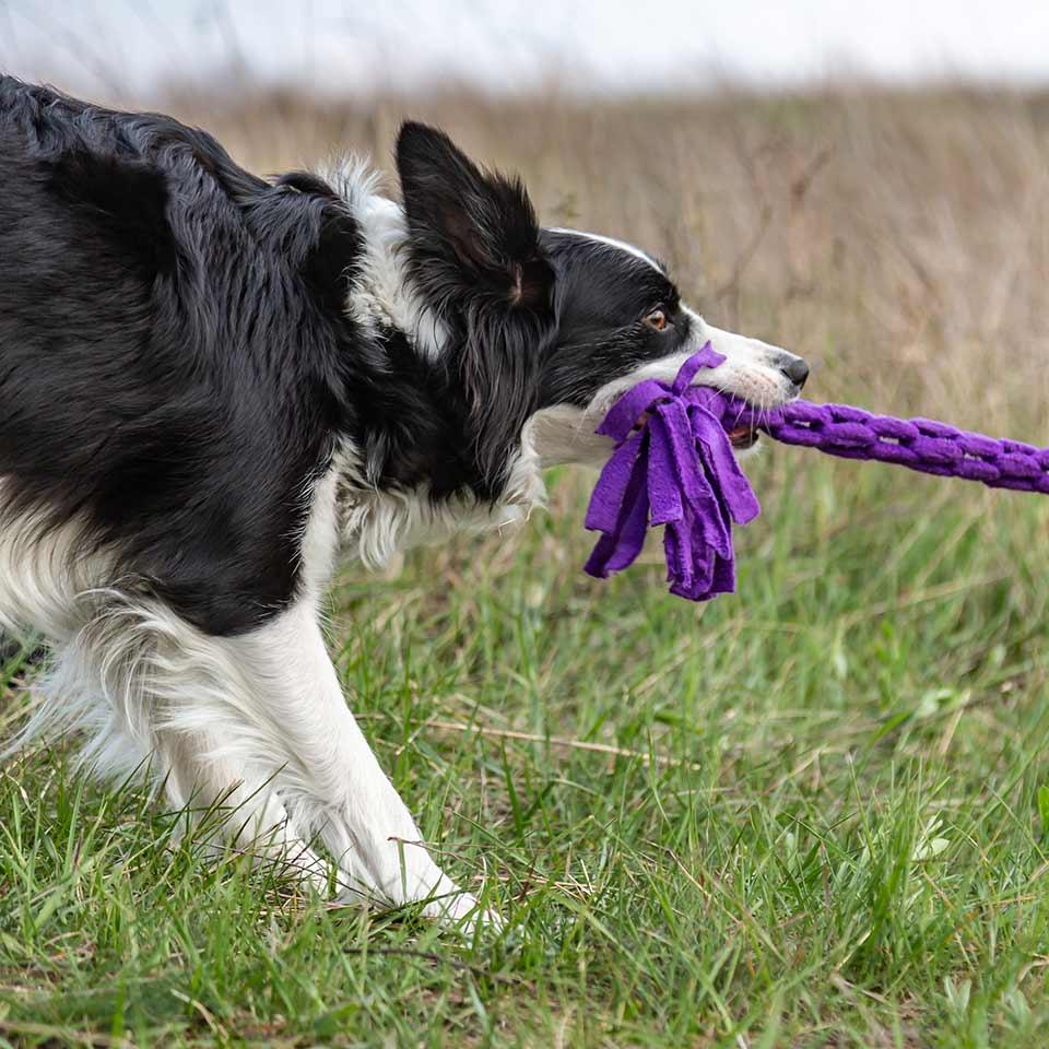 Il tira e molla è un bel gioco per i cani, ecco perchè