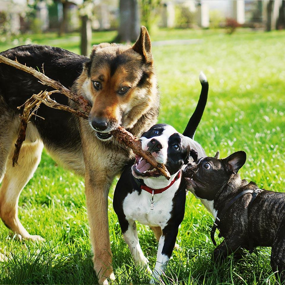 E' raro che i cani si arrabbino veramente