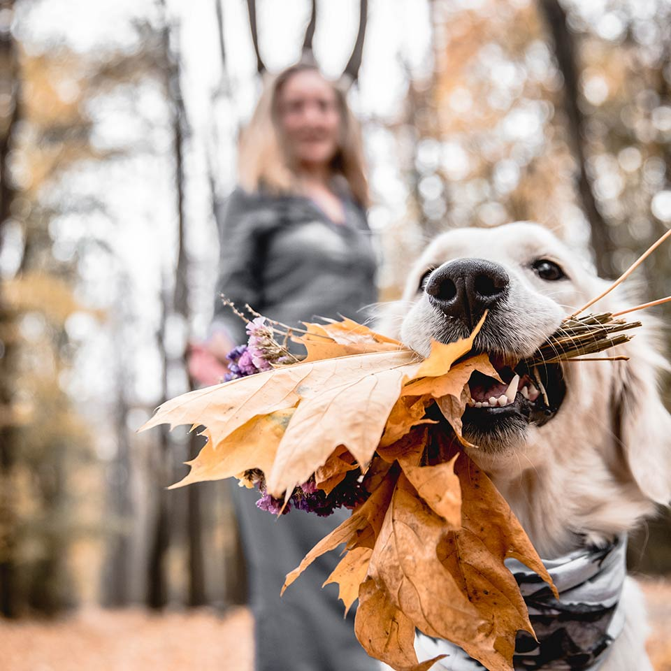 Il legame tra cane e proprietari è come tra figli e genitori