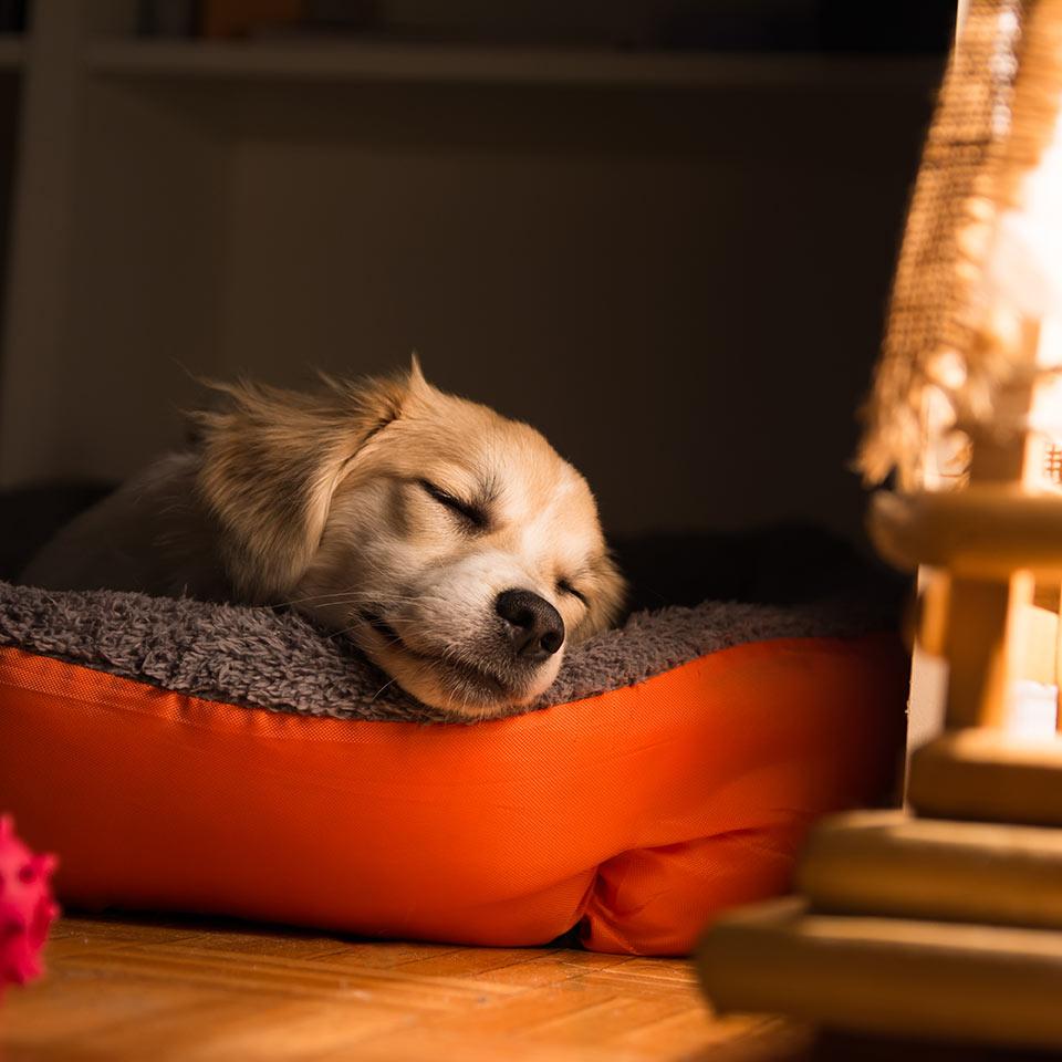 Alcune caratteristiche del sonno dei cani