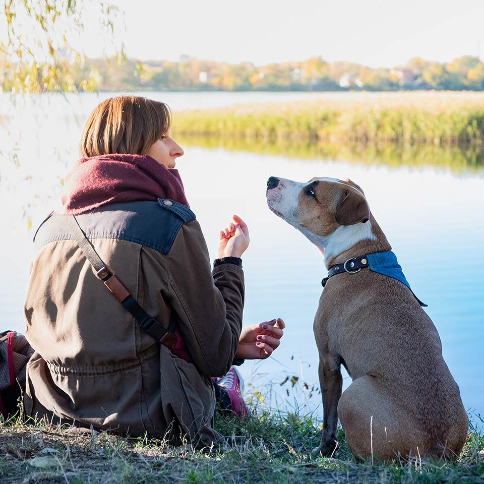 Per i cani la voce dei proprietari è speciale