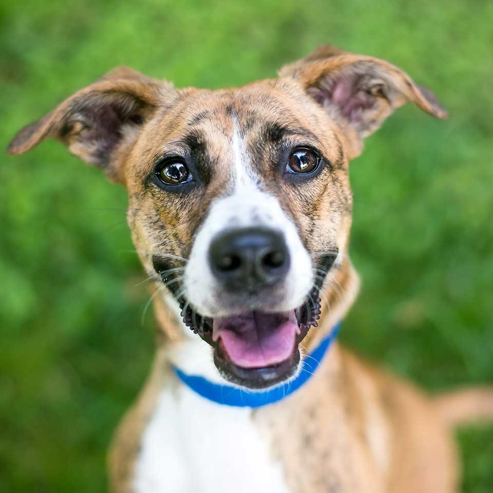 Umani impauriti, emozionati, stressati: i cani se ne accorgono