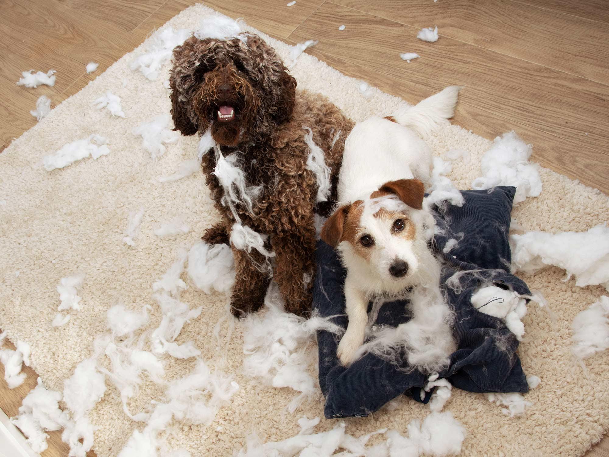 I cani e i proprietari sono sono uniti anche nello stress